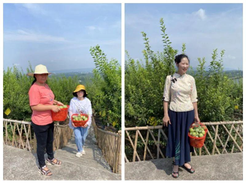 走向我们的小康生活 | 重庆乌牛村:仙桃李挂满幸福枝