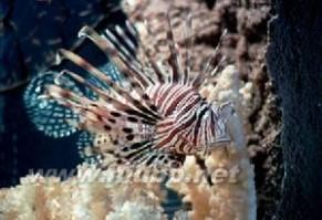 加勒比海:加勒比海-概述,加勒比海-历史沿革_加勒比海