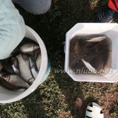整鱼两吃 杂鱼锅贴(地锅杂鱼),杂鱼锅贴(地锅杂鱼)的做法,杂鱼锅贴(地锅杂鱼)的家常做法