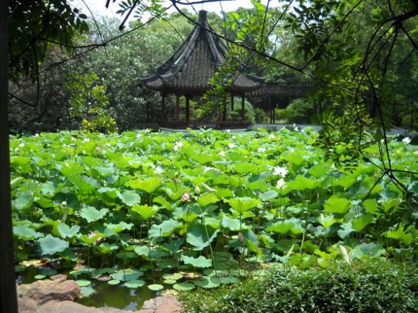 上海醉白池 又 游 醉 白 池(游记)