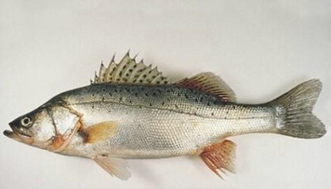 买鱼要注意些什么