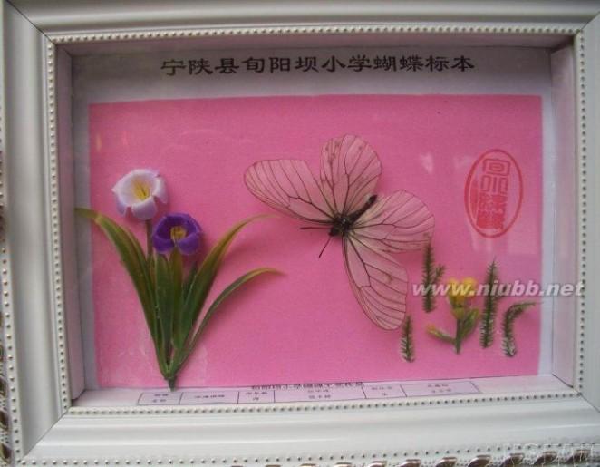 我的设想淘宝开店美丽蝴蝶花仙子淘宝店