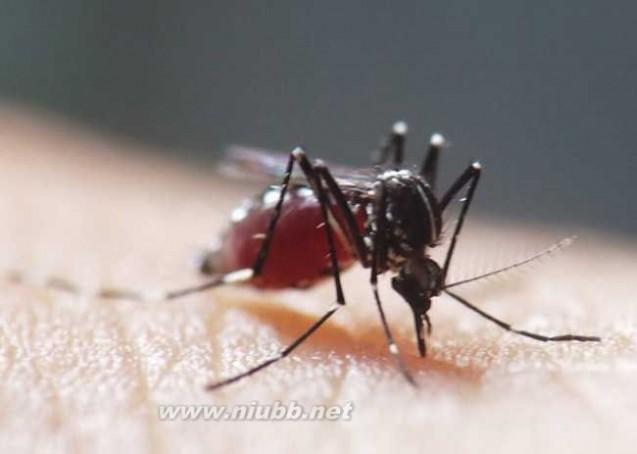 蚊子的危害及防治措施_蚊子的危害