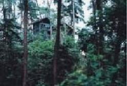 歌乐山国家森林公园图片