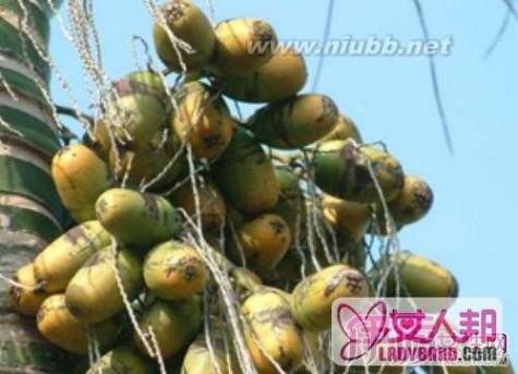 吃槟榔有什么好处 吃槟榔有什么好处和坏处 有消食醒酒等作用