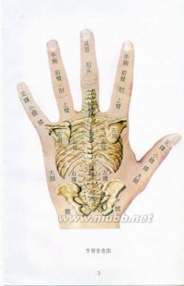 手相面相观人专集——标准手诊图