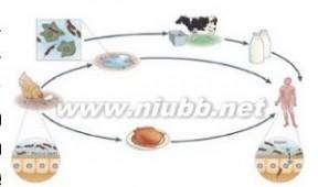 阪崎肠杆菌 阪崎肠杆菌:阪崎肠杆菌-概述,阪崎肠杆菌-发现过程