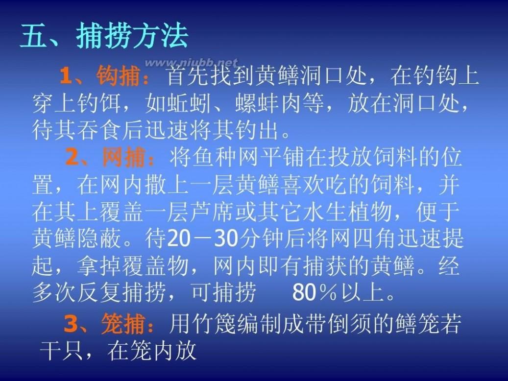 黄鳝养殖技术 黄鳝的养殖技术(PPT 60页)