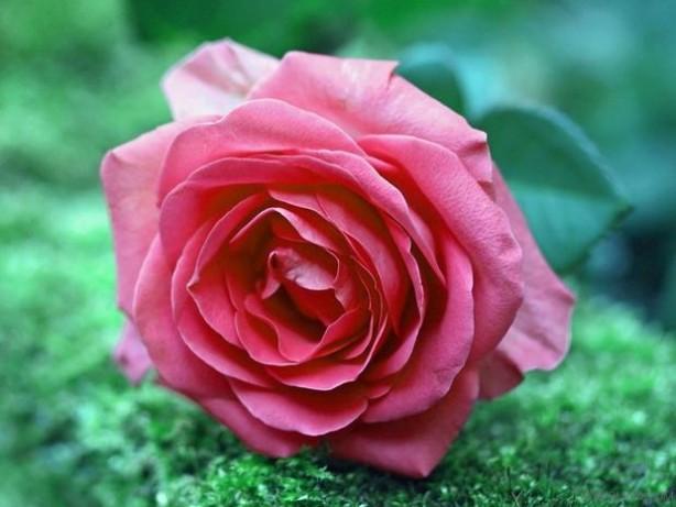 适合家庭养殖的花卉种类