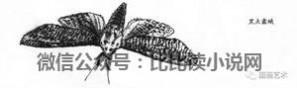 昆虫资料 绘画资料图典:昆虫图谱