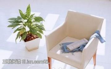 能去除室内有害物质的植物