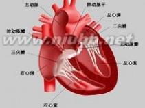 妊娠期心脏病:妊娠期心脏病-基本资料,妊娠期心脏病-诊断_妊娠期心脏病