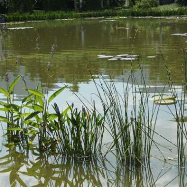 芦苇的用途 芦苇根的作用 芦苇根六大功效