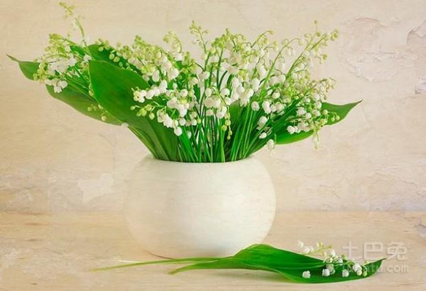 铃兰花语 铃兰花语是什么?幸福希望的象征!