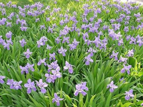 养花的见解 养花的见解分享,养花心得推荐