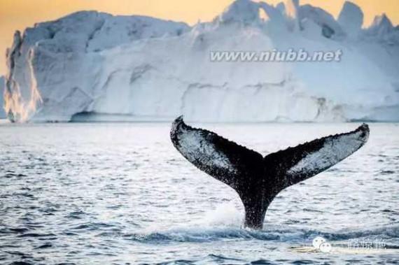 鲸鱼的种类 最好的旅行?|?还有一大波鲸鱼即将袭来
