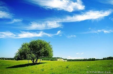 河北承德塞罕坝蓝的天绿的草图片