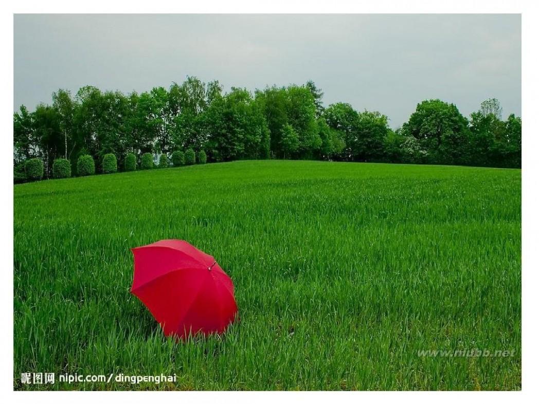 万绿丛中一点红 万绿丛中一点红