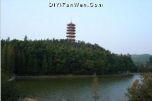 仙湖植物园图片