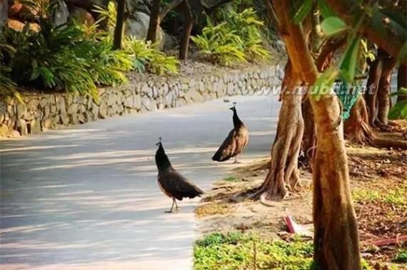 放鸡岛好玩吗 盘点放鸡岛旅游攻略 这个夏天出发吧