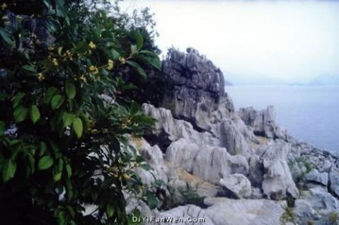 桂花岛图片