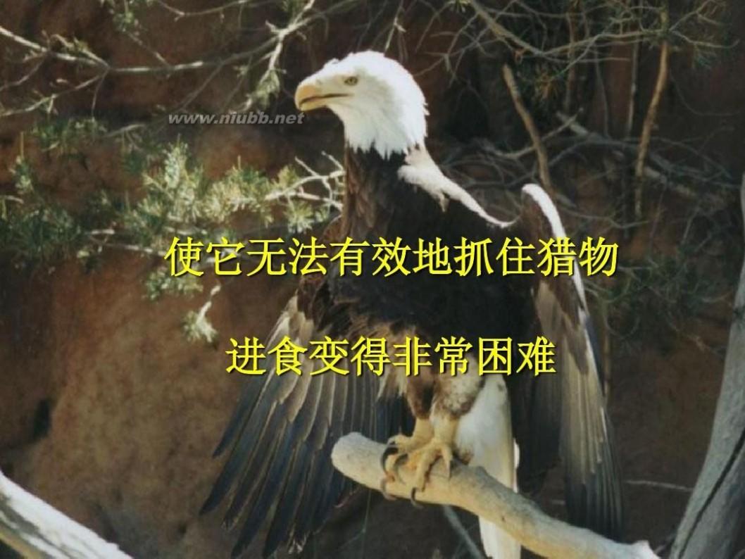 鹰蜕变 雄鹰蜕变的故事