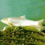 细鳞鱼 细鳞鱼多少钱一斤,细鳞鱼营养价值,最大细鳞鱼,细鳞鱼食用