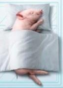 轻轻敲醒沉睡的心灵,慢慢张开你的眼睛