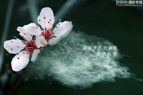 ps为花卉后期处理增添写意烟雾效果