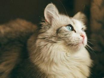 梦到变成猫是什么意思