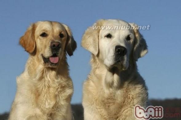 1个狗狗太孤单,家养两只狗的常见问题解析_两只小狗