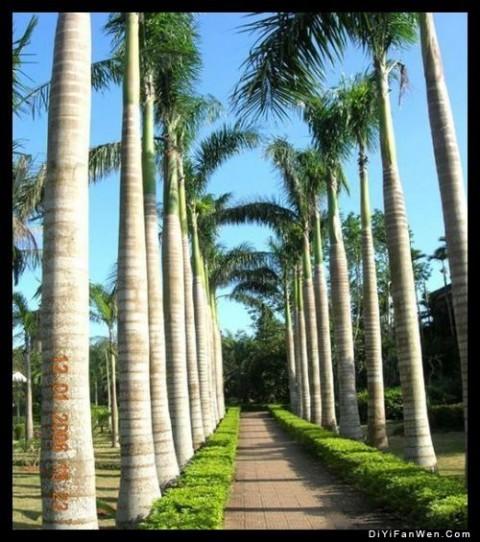 海南兴隆亚洲风情园图片