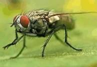 昆虫资料 昆虫资料