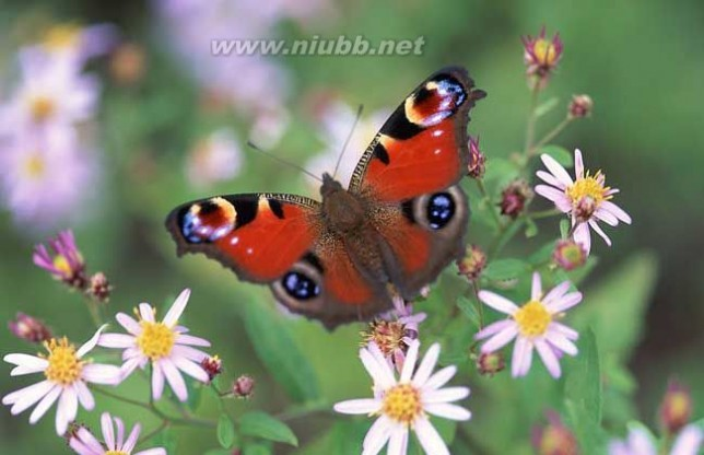 庄周梦蝶的寓意是什么?_庄周梦蝶的寓意