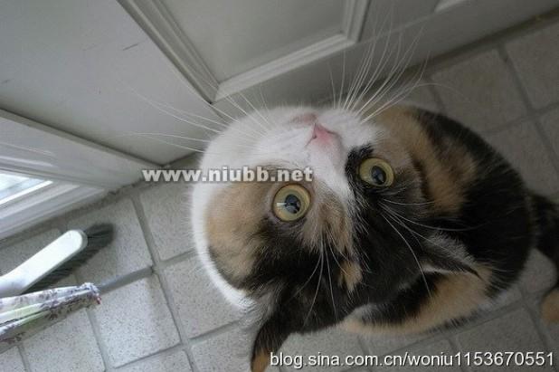 """猫言猫语 猫言猫语之""""身体语言""""篇"""