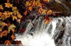 秋夜独坐 雨中山果落, 灯下草虫鸣。 王维《秋夜独坐》