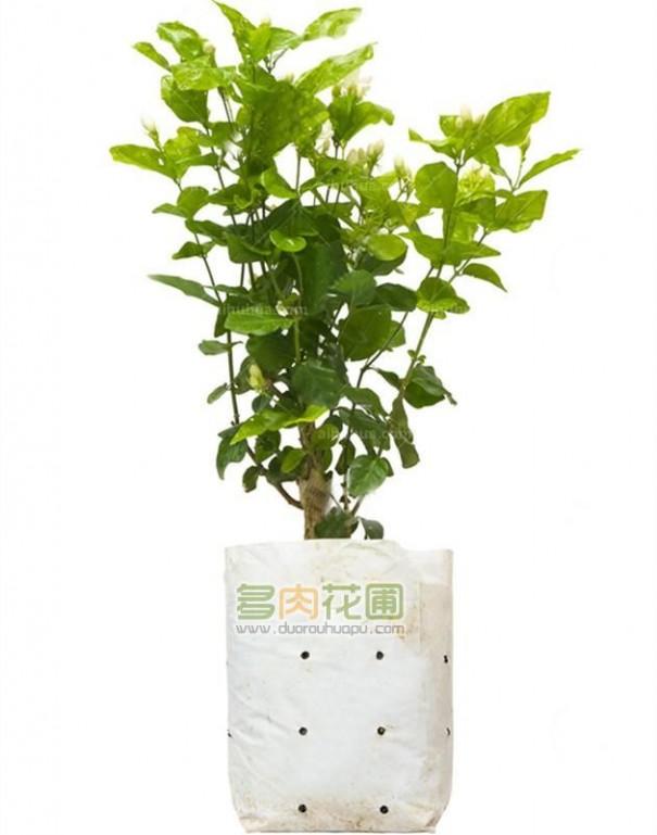家庭常见16种懒人植物