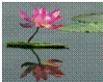 平面镜成像原理 如图所示的四种现象中,与平面镜成像原理相同的是()A.人在屏幕上的影子B.蜡烛通过小孔成像C.荷花在