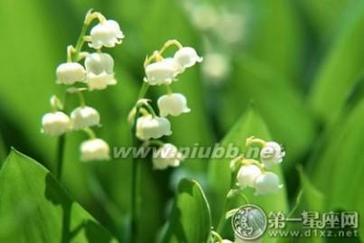 铃兰花语 白色铃兰花语,你知道是什么吗