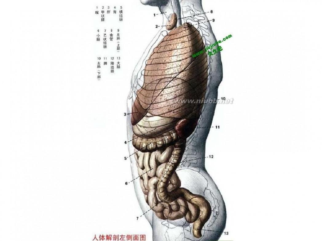 人体经络使用手册 人体经络穴位图解大全